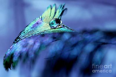 Peacock Photograph - Tomorrows Dream by Krissy Katsimbras