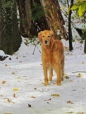 Golden Retriever Photograph - Too Early For Snow Mama by Elizabeth Dow