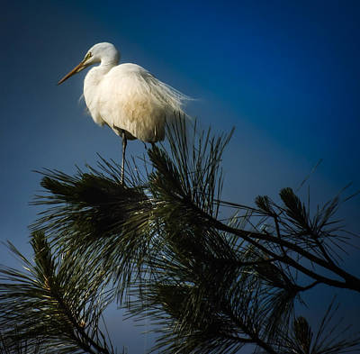 Stork Photograph - On Top Of The World by Karen Wiles