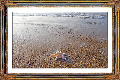 Topsail Island The Only One Print by Betsy C Knapp