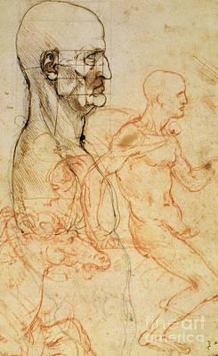 Torso Of A Man In Profile Print by Leonardo da Vinci