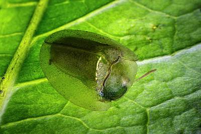 Beetle Photograph - Tortoise Beetle On A Leaf by Philippe Psaila