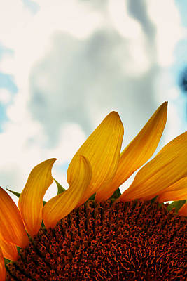 Sunflower Photograph - Touch The Sky by Emily Stauring
