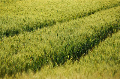 Traces In The Barley Original by Philippe Meisburger