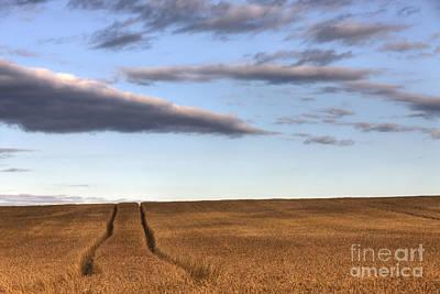 Alberta Prairie Landscape Photograph - Tracks In The Wheat by Dan Jurak