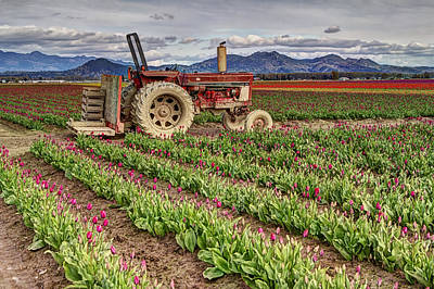 Reflection Harvest Photograph - Tractor And Tulips by Mark Kiver