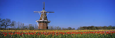 Traditional Windmill In A Tulip Field Print by Panoramic Images