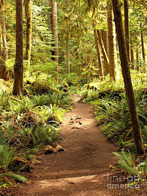 Green And Brown Photograph - Trail Through The Rainforest by Carol Groenen