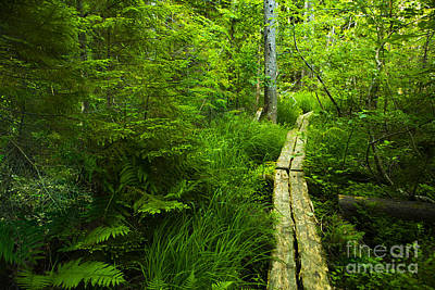 Acadia National Park Photograph - Trail Through The Woods by Diane Diederich
