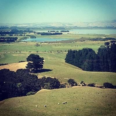Sheep Photograph - Train Ride. #ispy #newzealand by Nate Greenberg