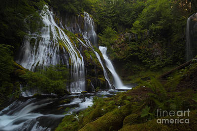 Northwest Photograph - Tranquil Forest Waterfall by Mike Reid