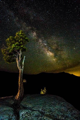 Tree Amongst The Stars Print by Mike Lee