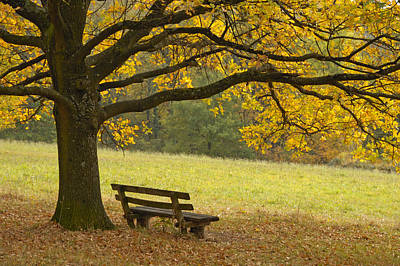 Empty Chairs Photograph - Tree And Bench In Fall by Matthias Hauser