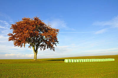 Hay Bale Photograph - Tree And Hay Bales by Aged Pixel