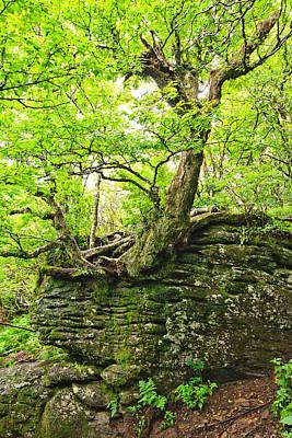 Tree And Rock Print by Mela Luna