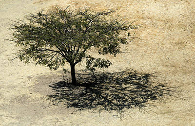 Landscape Photograph - Tree And Shadow At Monte Alban by Rob Huntley
