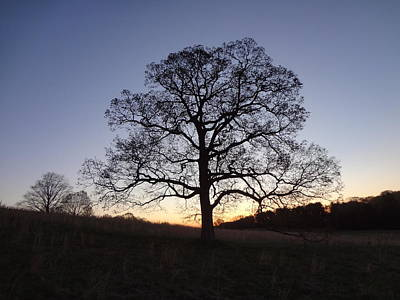 Valley Forge Photograph - Tree At Dawn by Michael Porchik