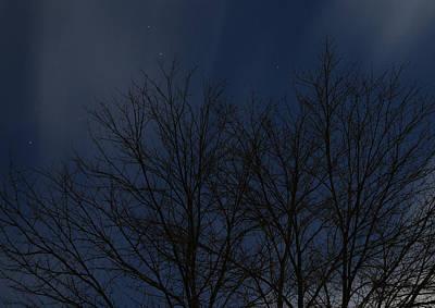 Tree At Night 2 Print by Scott Angus