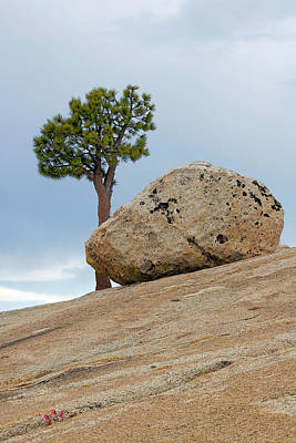 Peaks Photograph - Tree At Olmsted Point Yosemite National Park California by Christine Till