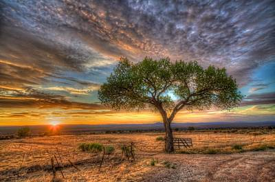 Tree At Sunset Print by William Wetmore