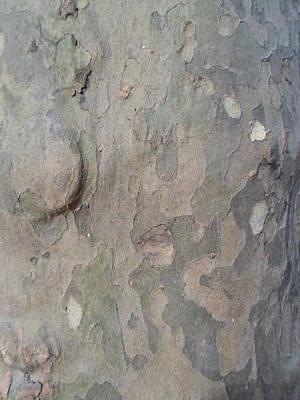 Photograph - Tree Bark by Jenna Mengersen