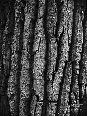 Neurotic Images Photograph - Tree Bark Monochrome by Chalet Roome-Rigdon