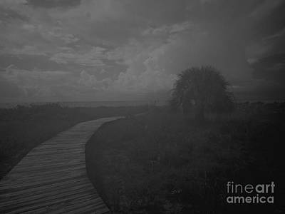 Sanibel Photograph - The Tree By The Sea by Jeff Breiman