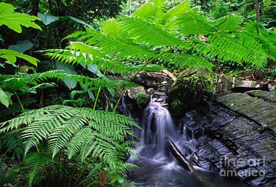 Tree Fern And Waterfall Print by Thomas R Fletcher