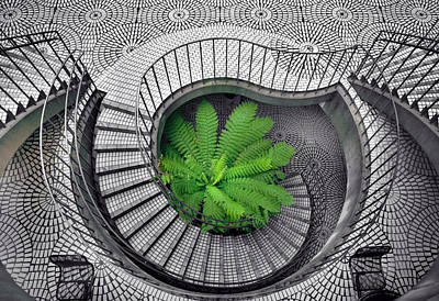 Tree Fern In The Stairs Print by Daniel Furon
