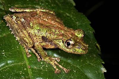 Tree Frog Print by Alex Hyde