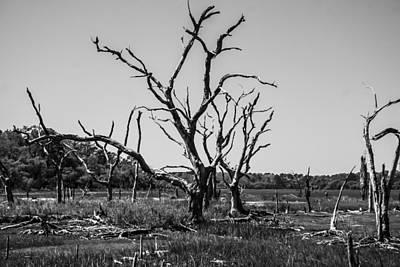 Tree Graveyard Print by Steven  Taylor