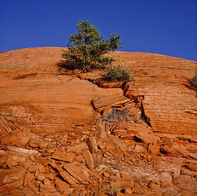 Tree Growing On Rock Face Print by Panoramic Images