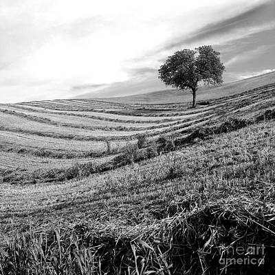 Tree In A Mowed Field. Auvergne. France Print by Bernard Jaubert