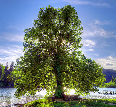 Light Photograph - Tree by Ivan Slosar