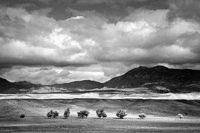 Warner Photograph - Tree Line by Peter Tellone