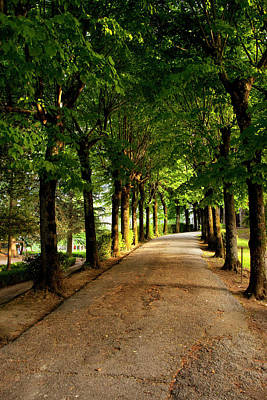 Tree-lined Pathway In Montepulciano Print by Brian Jannsen