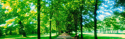 Tree-lined Road Dresden Vicinity Germany Print by Panoramic Images