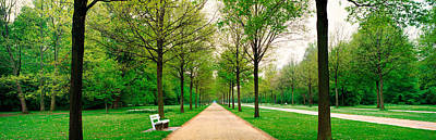 Tree-lined Road Hessen Kassel Vicinity Print by Panoramic Images