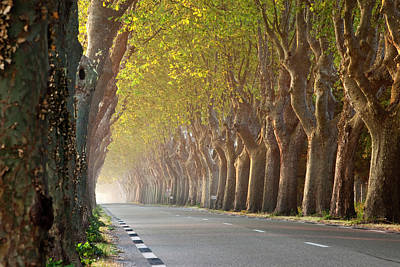 Tree Lined Road Near Saint Remy Print by Brian Jannsen