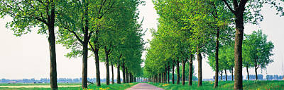Tree-lined Road Noord Holland Edam Print by Panoramic Images