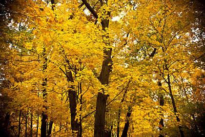 Tree Of Gold Print by Kamil Swiatek