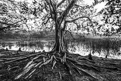 Tree Of Life Print by Debra and Dave Vanderlaan