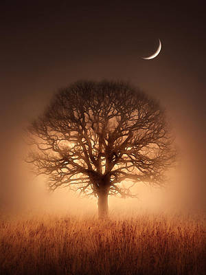 Moon Digital Art - Tree Of Light by Jennifer Woodward