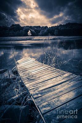 Wetland Photograph - Tree Of Zen by Edward Fielding