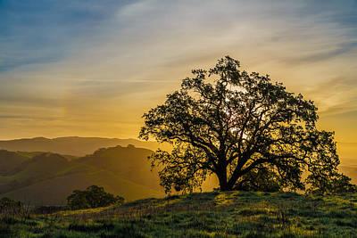 Tree On A Ridge Print by Sarit Sotangkur
