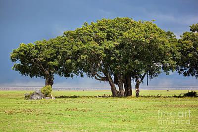 Tree On Savannah. Ngorongoro In Tanzania Print by Michal Bednarek