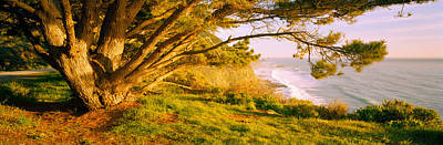 Big Sur California Photograph - Tree On The Coast, Big Sur, California by Panoramic Images