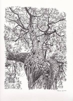 Old Montreal Drawing - Tree Pen Drawing 1 by Remrov