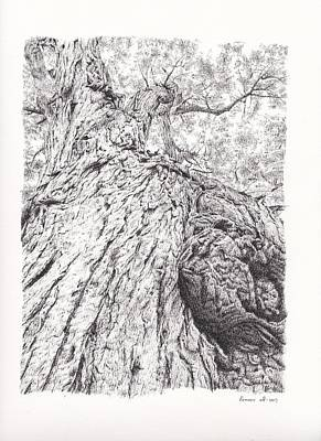 Montreal Drawing - Tree Pen Drawing 2 by Remrov