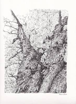 Montreal Drawing - Tree Pen Drawing 3 by Remrov